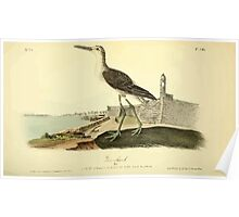 James Audubon Vector Rebuild - The Birds of America - From Drawings Made in the United States and Their Territories V 1-7 1840 - Greenshank Poster
