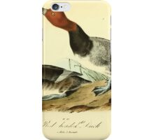 James Audubon Vector Rebuild - The Birds of America - From Drawings Made in the United States and Their Territories V 1-7 1840 - Red Headed Duck iPhone Case/Skin