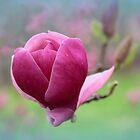 Magenta Magnolia by Jessica Jenney