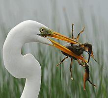 Great Egret with Crawdad by photosbyjoe