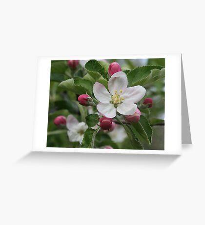 Michigan Apple Blossom Greeting Card