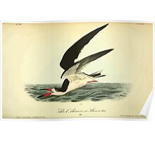 James Audubon Vector Rebuild - The Birds of America - From Drawings Made in the United States and Their Territories V 1-7 1840 - 500 Poster