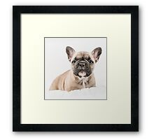First Frenchie  Framed Print