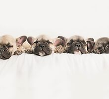 Frenchies Dreaming  by Andrew Bret Wallis