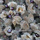 Chinese Chestnuts by WildestArt