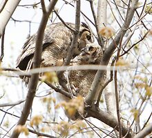 Great Horned Owls #1 - Mama and Owlet by DigitallyStill