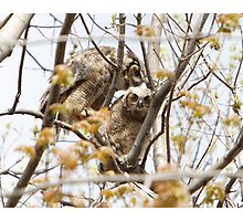 Great Horned Owls #2 - Mama and Owlet Photographic Print