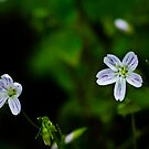 Tiny Flower in the Big Forest by David Friederich