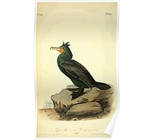 James Audubon Vector Rebuild - The Birds of America - From Drawings Made in the United States and Their Territories V 1-7 1840 - Double Crested Cormorant Poster