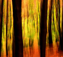 In the forest #2 by Bob Johnson