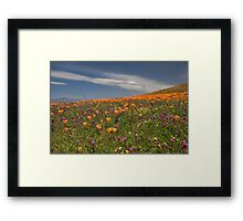 Poppies and Owls Clover Framed Print