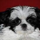 Fractal Puppy #2 by Teresa Zieba