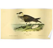 James Audubon Vector Rebuild - The Birds of America - From Drawings Made in the United States and Their Territories V 1-7 1840 - Pomerine Jager Poster