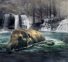 Bath Time by Dave Godden