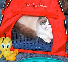 Lily-Rose & Friend Tweety! by Carol Clifford