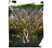 one tree - un arbol Poster