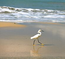 Yellow Feet by Pardus