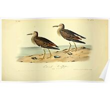James Audubon Vector Rebuild - The Birds of America - From Drawings Made in the United States and Their Territories V 1-7 1840 - Pectoral Sandpiper Poster