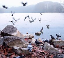 Flight of pigeons  by KERES Jasminka