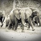 The running of the elephants by bababen