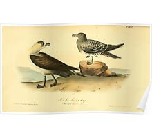 James Audubon Vector Rebuild - The Birds of America - From Drawings Made in the United States and Their Territories V 1-7 1840 - Richardson Jager Poster