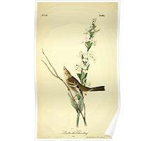 James Audubon Vector Rebuild - The Birds of America - From Drawings Made in the United States and Their Territories V 1-7 1840 - Shattucks Bunting Poster