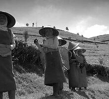 Tea Ladies? by Gav (gRizzle) Rose