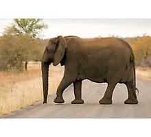 Mama Elephant Photographic Print