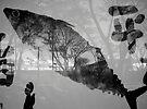 Fish Facing Left by John Douglas