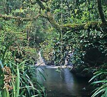 Brindle Creek by Bruce Webber :: Webber Photography