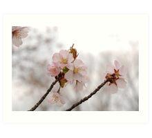 Paper Blossoms Art Print
