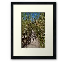 The Willow Walk Framed Print