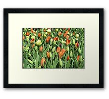 Tulip Patch Framed Print