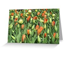 Tulip Patch Greeting Card