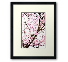 Underneath Pink Blooms Framed Print