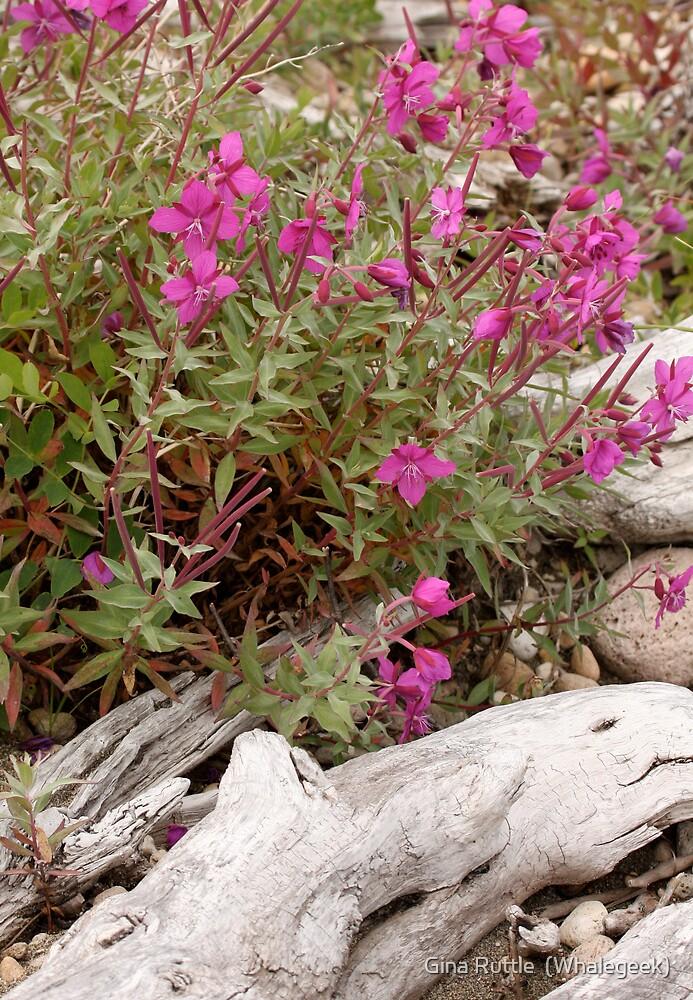 Alaskan Fireweed by Gina Ruttle  (Whalegeek)