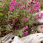 Alaskan Fireweed by Gina Ruttle  (Whalegeek)