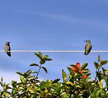 Two Hummies on a Wire by Jo Nijenhuis