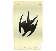 James Audubon Vector Rebuild - The Birds of America - From Drawings Made in the United States and Their Territories V 1-7 1840 - Frigate Pelican or Man of War Bird Poster