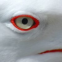 Seagle Eye by AJM Photography