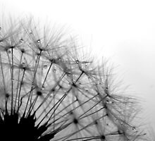 Dandelion Drops by Tamara Brandy
