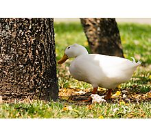 Wonderin' Pekin Photographic Print