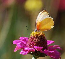 Butterfly love by laureenr