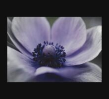 Faded Anemone by rabeeker
