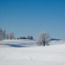 Winter Wonderland by Kasia-D