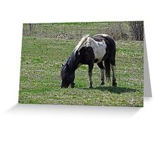 Pacified Pony Greeting Card