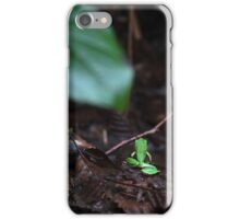 Pacific Tree Frog iPhone Case/Skin