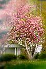 City Magnolia..... by Larry Llewellyn