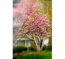 City Magnolia..... Photographic Print