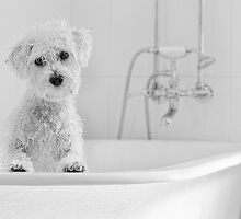 Bath Time.. by Nicole Goggins